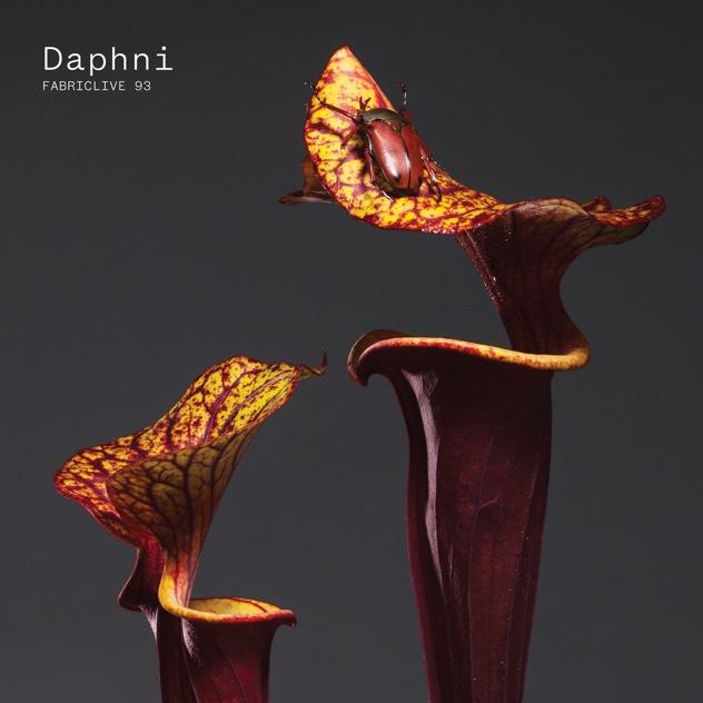 daphni
