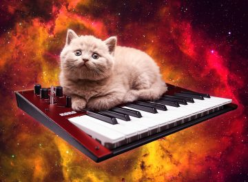 If you're not following 'Cats On Synthesizers In Space' you're missing out